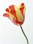 ティシュ先生の花画像