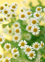 流羽先生の花画像