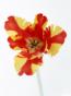 ルナ先生の花画像
