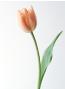 ルアナ 美星先生の花画像