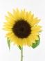 莉玖先生の花画像