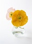 喜美先生の花画像