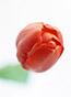 御埼先生の花画像