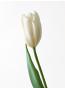 美蛇先生の花画像