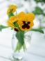 マザー・ココ先生の花画像